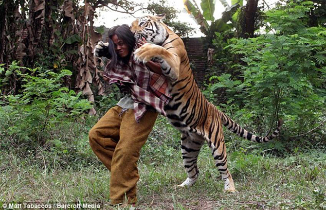 Pics Photos Tiger Hugs Man