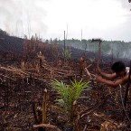 Extinction risk as Aceh opens forests for logging
