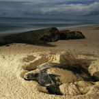 Keeping a clean beach for turtles to lay eggs