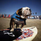 The annual Surf Dog competition at Huntington Beach