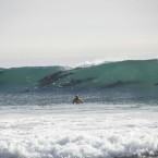 Dolphins Surf With Competitors at Rincon Classic