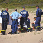 Surfer injured in collision with dolphin