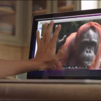 Orangutan Uses Sign Language to Ask for Help from Deaf Girl