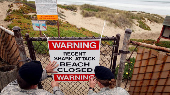 The World's Most Dangerous Shark Zones for Surfing