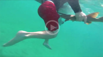 Video: The Smallest Shark Attack