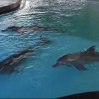 Protests Greet New Dolphin Pool Attraction in Keramas Beach