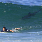 Deadliest Shark Attack Beaches