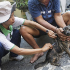 Bali to Vaccinate 400,000 Dogs in 2015