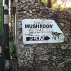 Mushrooms: Allowed or Not Allowed in Indonesia?