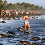 Tourists Prevent Endangered Sea Turtles From Nesting