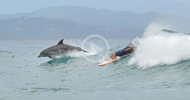 Video: Dolphins and Surfers Sharing Waves