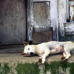 Bali's Deputy Governor Denies That Bali is Selling Dog Meat to Jakarta