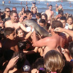 Young Dolphin Dies When it's Carried on The Beach For People to Stroke and Take Photographs