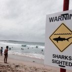 Two Beaches Closed in Australia After Surfer Knocked Off Board by Shark