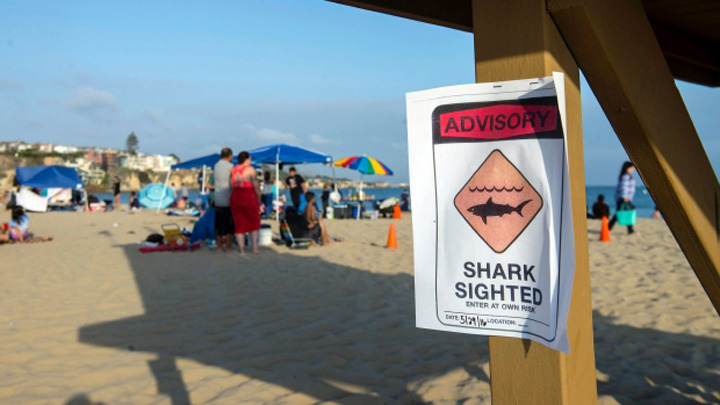 Woman Attacked by a Shark in Orange County