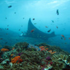 Indonesia awarded as Most Beautiful Diving Destination