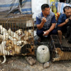 10,000 Dogs To Be Killed and Eaten at China's Annual Food Event