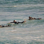WA Surf Contest Called Off After 61 Shark Sightings