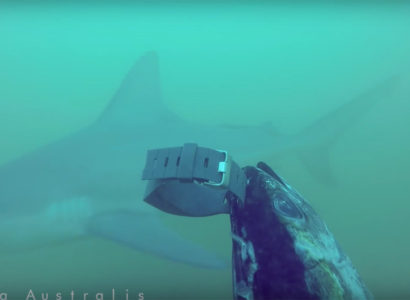 Video: Does Shark Repelent/Bands Works? Watch the video!