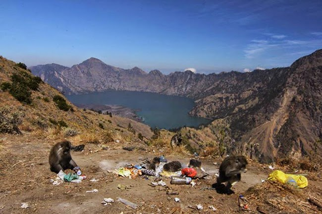 Ministry to Create Team to Remove Trash From Mt. Rinjani