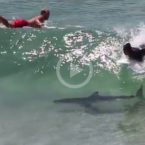 Video: Shark Swimming Underneath Surfers in Byron Bay
