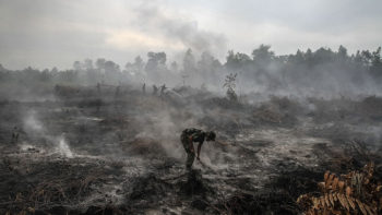100,000 may have died but there is still no justice over Indonesian air pollution