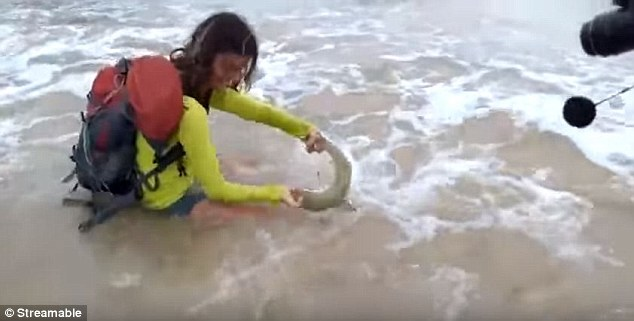 Woman Bitten by Shark After Picking It Up for a Selfie
