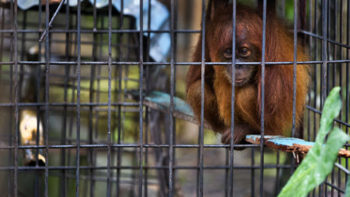 Indonesia Sees Increase in Illegal Wildlife Trade
