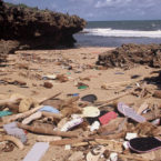 Millions of Discarded Flip Flops Posing Huge Hazard to Ocean Life