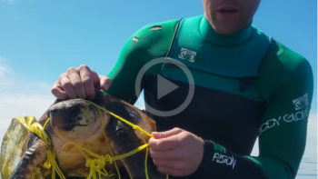 Guy Rescue a Sea Turtle Wrapped in Garbage