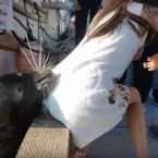 Video: Sea Lion Grabs Girl and Drags Her Into Water