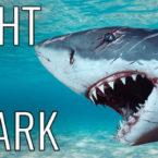 Video: How To Fight A Shark