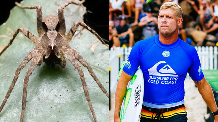 Mick Fanning Honoured With New Water Spider Species Named After Him