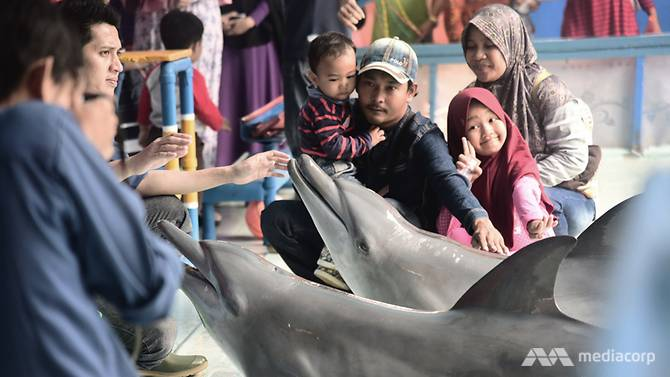 Indonesian Travelling Shows Where Dolphins Perform in The Name of Education